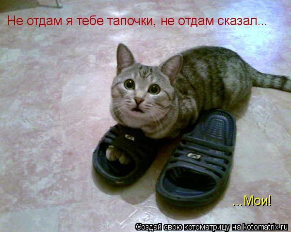 Котоматрица: Не отдам я тебе тапочки, не отдам сказал... ...Мои!