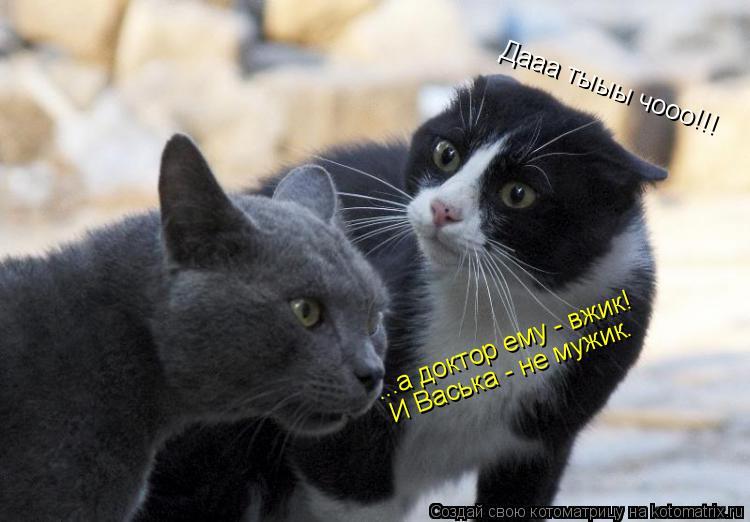 Котоматрица: ...а доктор ему - вжик! И Васька - не мужик. Дааа тыыы чооо!!!