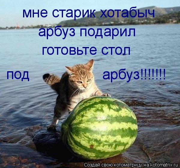 Котоматрица: мне старик хотабыч арбуз подарил под арбуз!!!!!!! готовьте стол