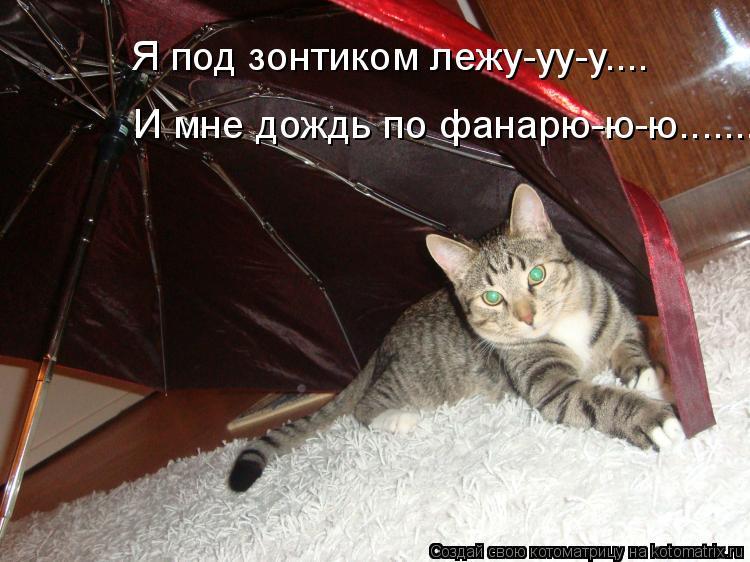 Котоматрица: И мне дождь по фанарю-ю-ю....... Я под зонтиком лежу-уу-у....