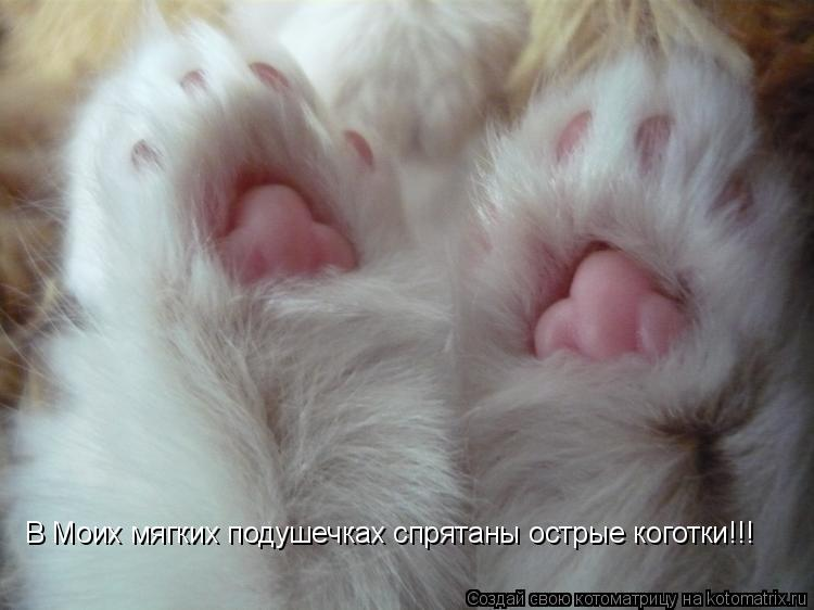 Котоматрица: В Моих мягких подушечках спрятаны острые коготки!!!