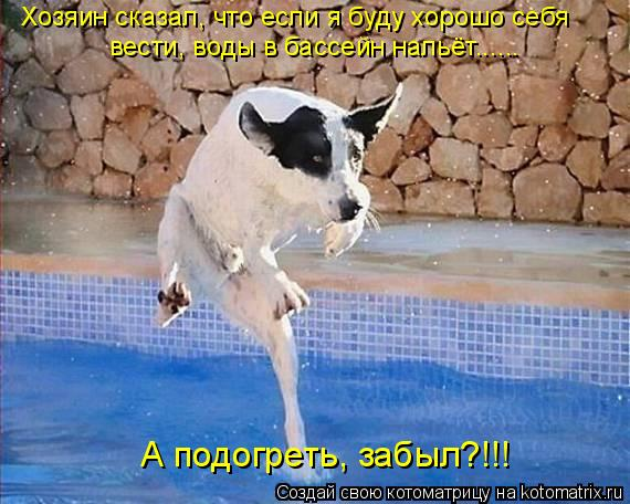 Котоматрица: Хозяин сказал, что если я буду хорошо себя вести, воды в бассейн нальёт...... А подогреть, забыл?!!!