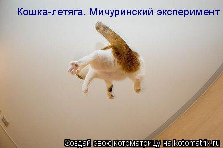 Котоматрица: Кошка-летяга. Мичуринский эксперимент
