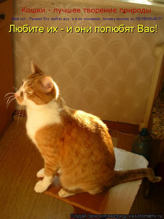 Котоматрица: Кошки - лучшее творение природы Мой кот - Рыжик! Его любят все, и я не понимаю, почему многие их НЕУВАЖАЮТ! Любите их - и они полюбят Вас!