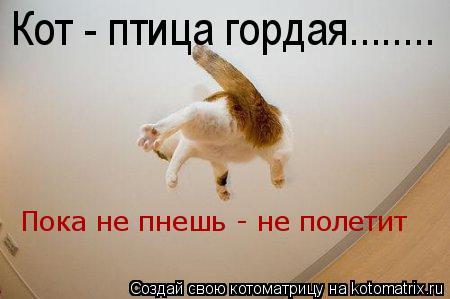 Котоматрица: Кот - птица гордая........ Пока не пнешь - не полетит