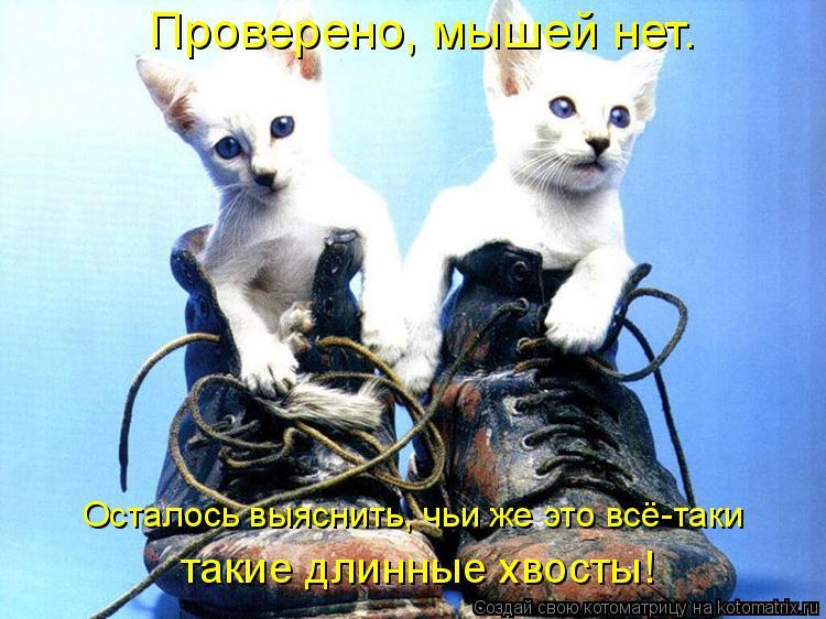 Котоматрица: Проверено, мышей нет. Осталось выяснить, чьи же это всё-таки такие длинные хвосты!