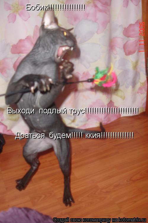 Котоматрица: Бобик!!!!!!!!!!!!!!!! Выходи  подлый трус!!!!!!!!!!!!!!!!!!!!!!! Драться  будем!!!!! ккия!!!!!!!!!!!!!!