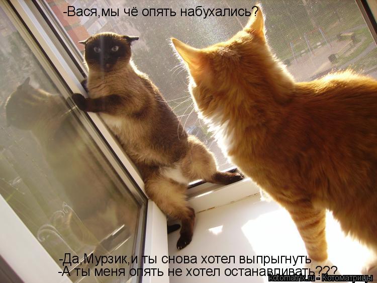 Котоматрица: -Вася,мы чё опять набухались? -Да,Мурзик,и ты снова хотел выпрыгнуть -А ты меня опять не хотел останавливать???