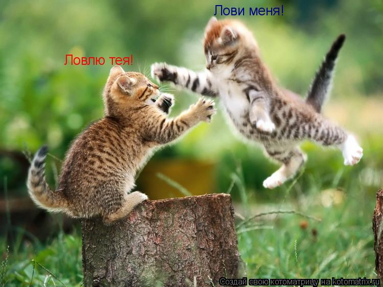 Котоматрица: Лови меня! Ловлю тея!