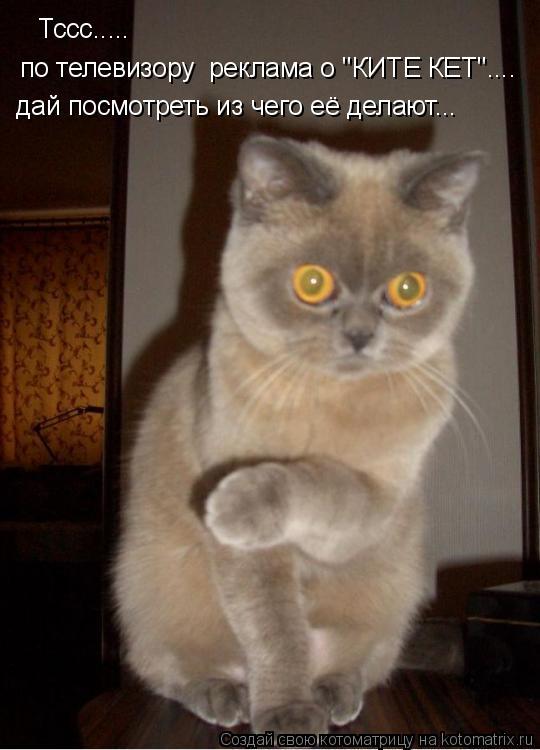 """Котоматрица: Тссс..... по телевизору  реклама о """"КИТЕ КЕТ"""".... дай посмотреть из чего её делают..."""