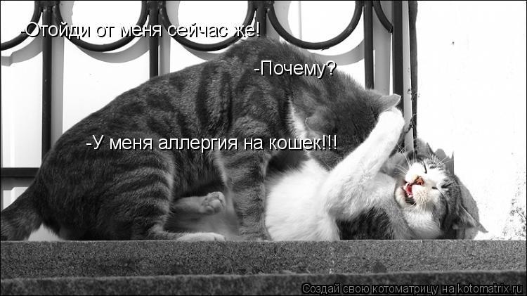 Котоматрица: -Отойди от меня сейчас же!  -Почему?  -У меня аллергия на кошек!!!