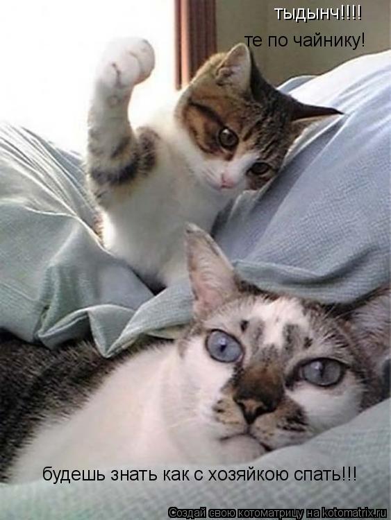 Котоматрица: тыдынч!!!!  те по чайнику! будешь знать как с хозяйкою спать!!!