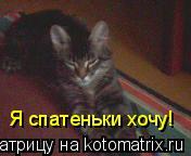 Котоматрица: Я спатеньки хочу!