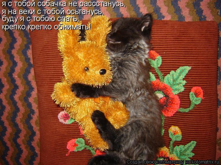 Котоматрица: я с тобой собачка не рассстанусь, я на веки с тобой осьтанусь, буду я с тобою спать, крепко,крепко обнимать!