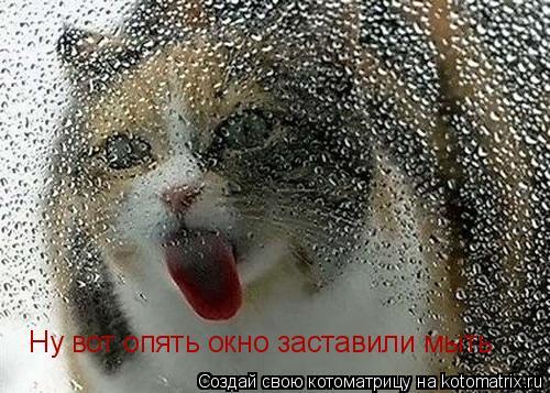Котоматрица: Ну вот опять окно заставили мыть