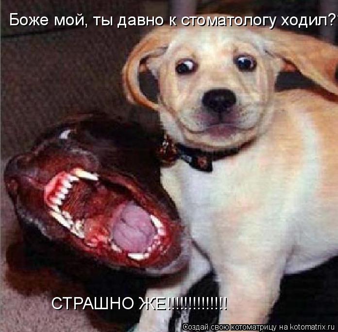 Котоматрица: Боже мой, ты давно к стоматологу ходил??? СТРАШНО ЖЕ!!!!!!!!!!!!!!