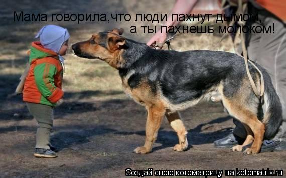 Котоматрица: Мама говорила,что люди пахнут дымом, а ты пахнешь молоком!