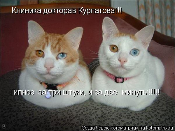 Котоматрица: Клиника докторав Курпатова!!! Гипноз  за три штуки, и за две  минуты!!!!!