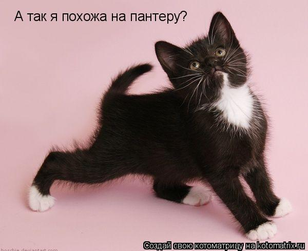 Котоматрица: А так я похожа на пантеру?
