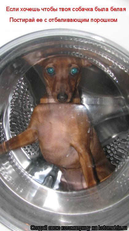 Котоматрица: Если хочешь чтобы твоя собачка была белая Постирай ее с отбеливающим порошком
