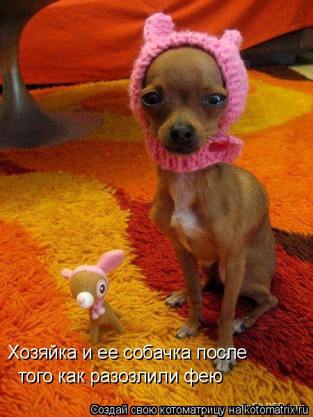 Котоматрица: Хозяйка и ее собачка после  того как разозлили фею