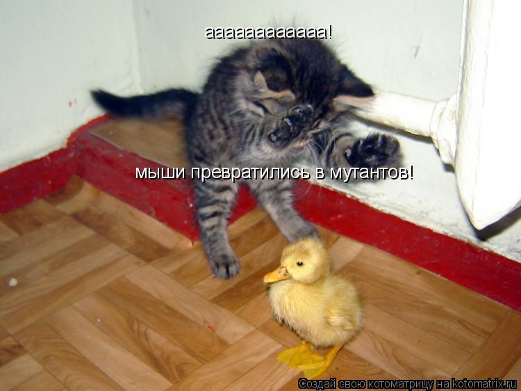 Котоматрица: aaaaaaaaaaaa! мыши превратились в мутантов!