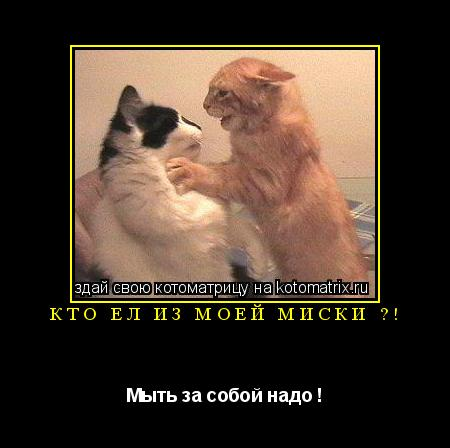 Котоматрица: Кто ел из моей миски ?! Мыть за собой надо !
