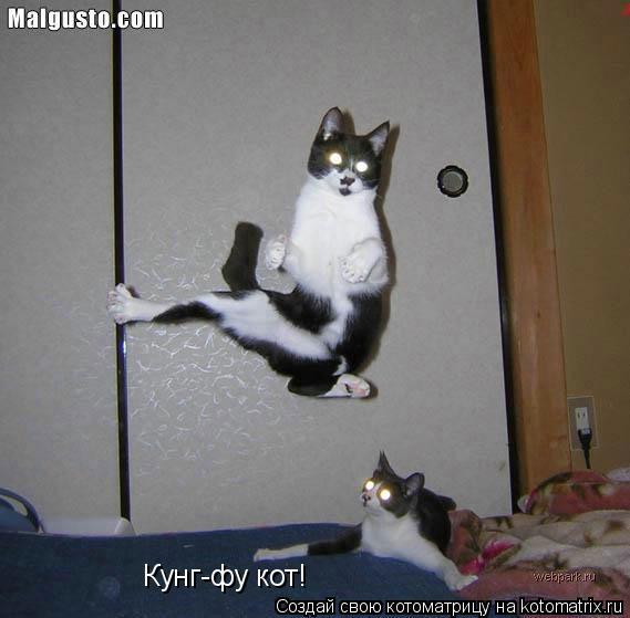 Котоматрица: Кунг-фу кот!