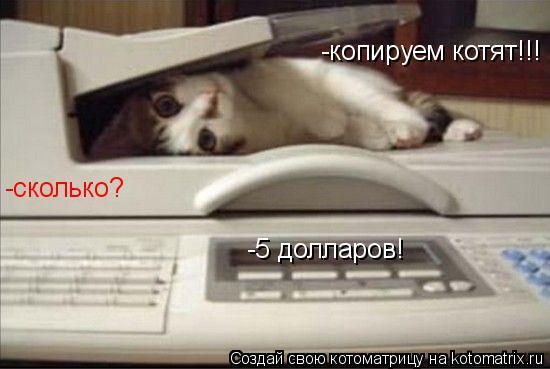 Котоматрица: -копируем котят!!! -сколько? -5 долларов!