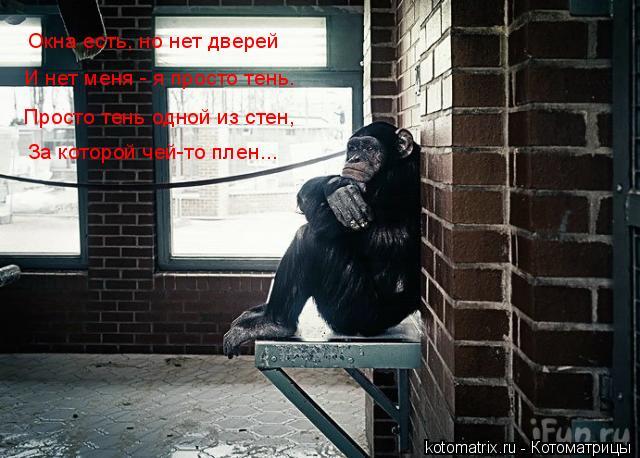Котоматрица: За которой чей-то плен... Просто тень одной из стен, И нет меня - я просто тень. Окна есть, но нет дверей