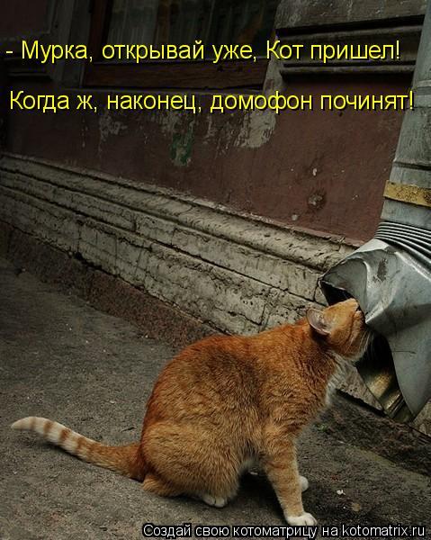 Котоматрица: - Мурка, открывай уже, Кот пришел!  Когда ж, наконец, домофон починят!