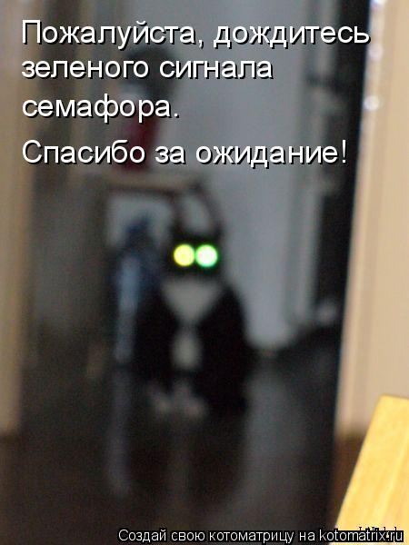 Котоматрица: Пожалуйста, дождитесь  зеленого сигнала семафора. Спасибо за ожидание!