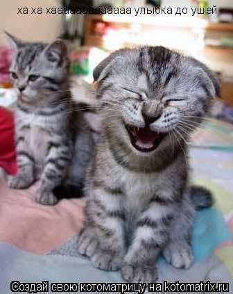 Котоматрица: ха ха хааааааааааааа улыбка до ушей