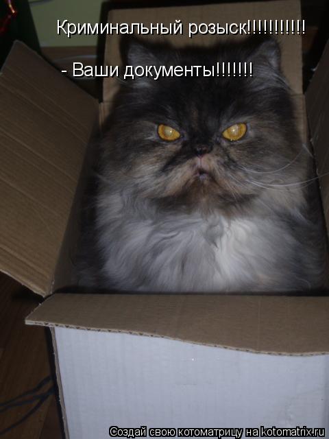 Котоматрица: Криминальный розыск!!!!!!!!!!! - Ваши документы!!!!!!!