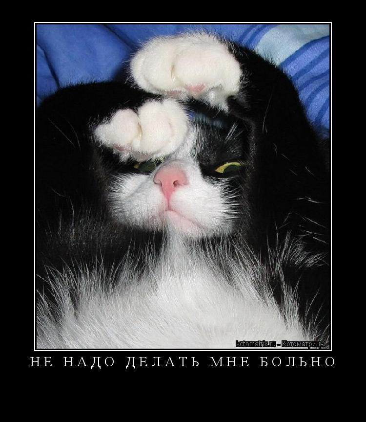Котоматрица: Не надо делать мне больно