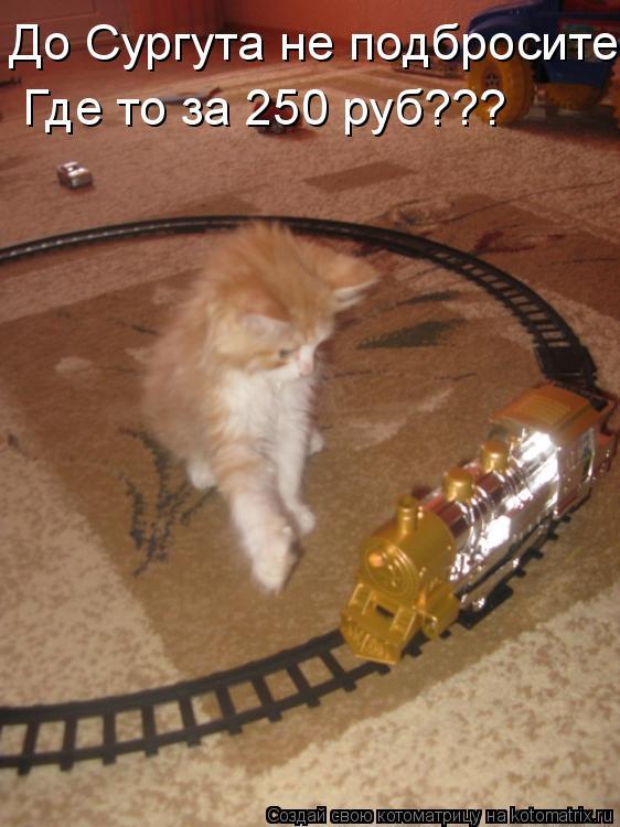 Котоматрица: До Сургута не подбросите Где то за 250 руб???