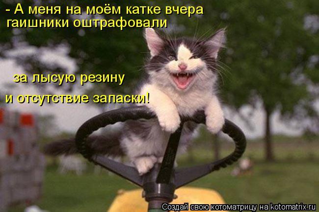 Котоматрица: - А меня на моём катке вчера  гаишники оштрафовали  за лысую резину и отсутствие запаски!