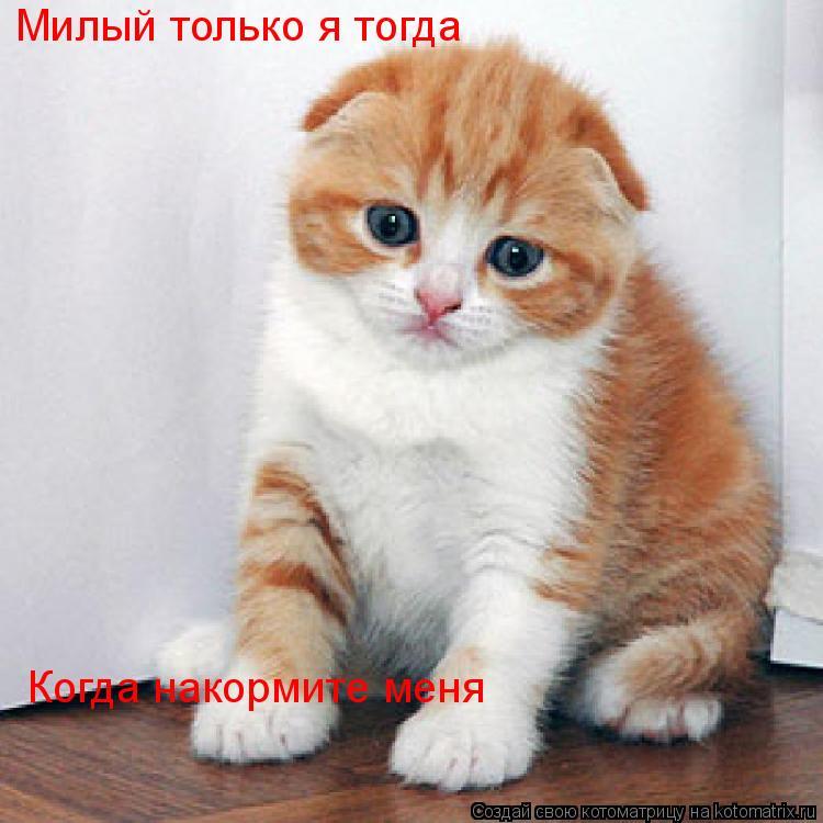 Котоматрица: Милый только я тогда Когда накормите меня