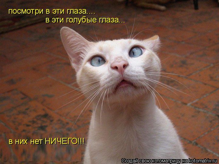 Котоматрица: посмотри в эти глаза.... в эти голубые глаза... в них нет НИЧЕГО!!!
