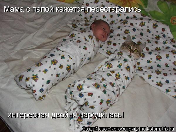 Котоматрица: интересная двойня народилась! Мама с папой кажется перестарались