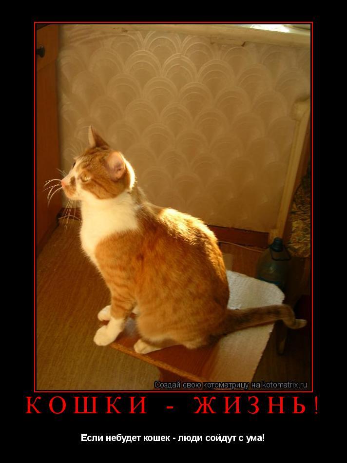 Котоматрица: КОШКИ - ЖИЗНЬ! Если небудет кошек - люди сойдут с ума!