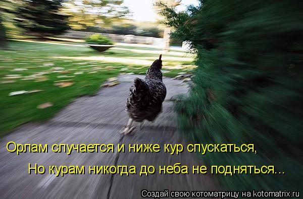 Котоматрица: Орлам случается и ниже кур спускаться, Но курам никогда до неба не подняться...