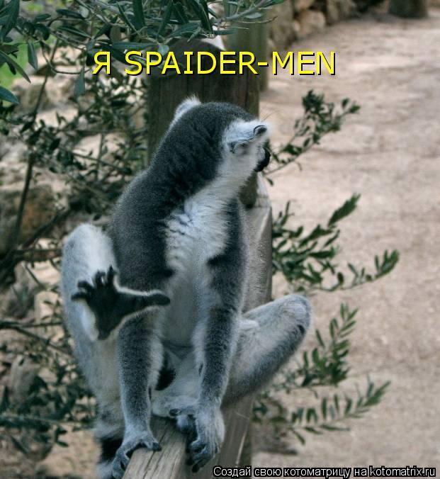 Котоматрица: Я SPAIDER-MEN