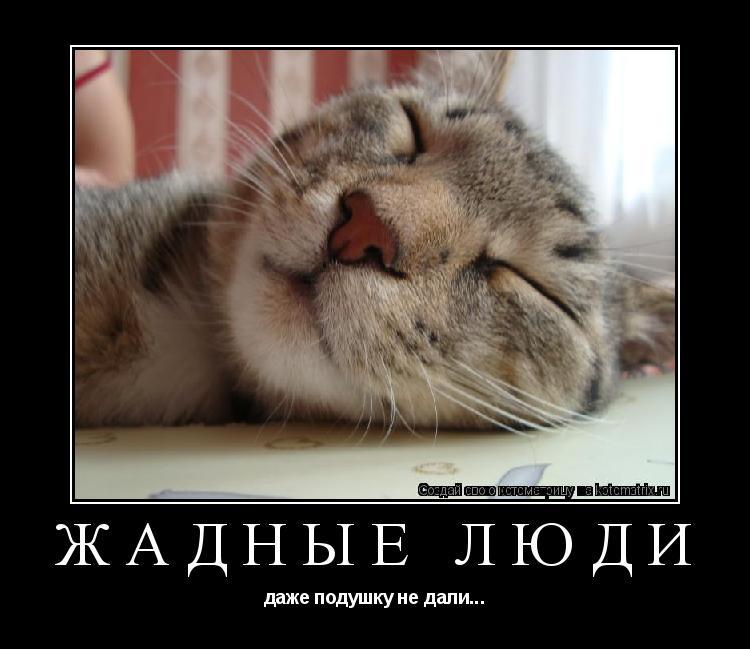 Котоматрица: ЖАДНЫЕ ЛЮДИ даже подушку не дали...