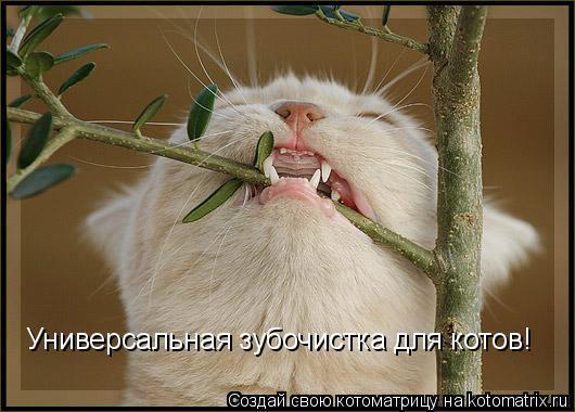 Котоматрица: Универсальная зубочистка для котов!