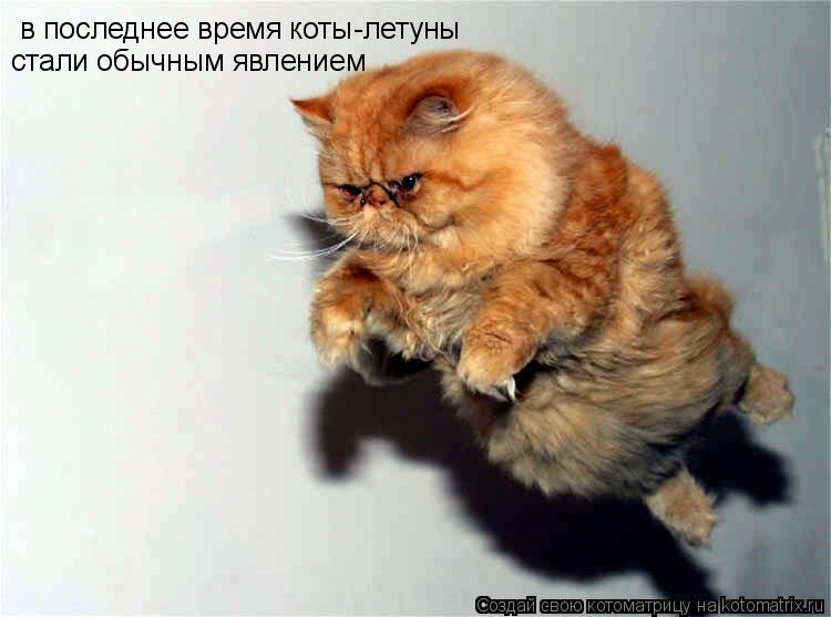 Котоматрица: в последнее время коты-летуны стали обычным явлением