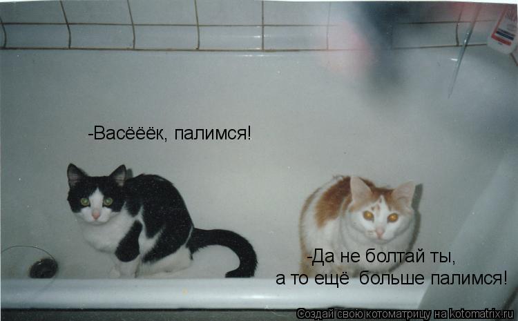 Котоматрица: -Васёёёк, палимся! -Да не болтай ты,  а то ещё  больше палимся!