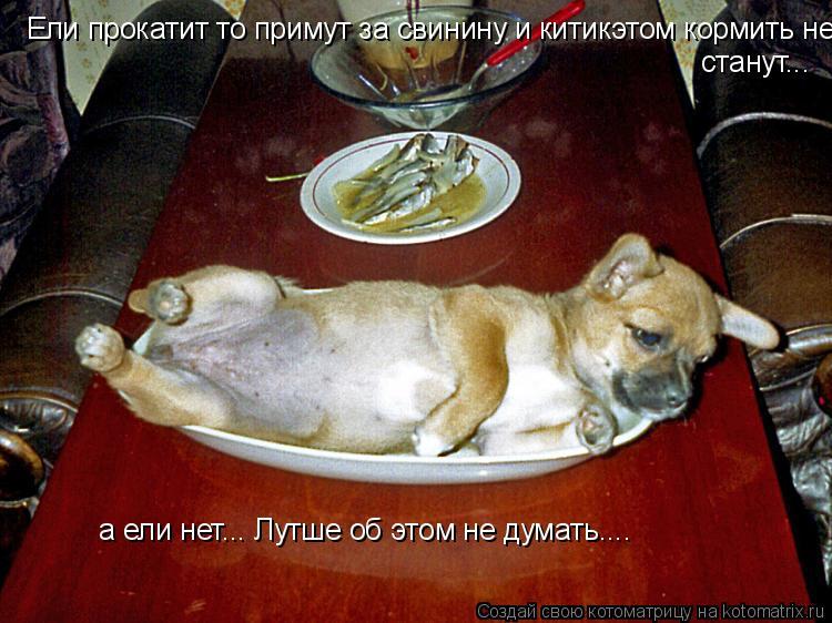 Котоматрица: Ели прокатит то примут за свинину и китикэтом кормить не станут... станут... а ели нет... Лутше об этом не думать....