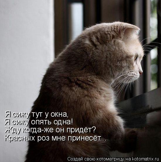 Котоматрица: Я сижу тут у окна, Я сижу опять одна! Жду когда-же он придёт? Красных роз мне принесёт...