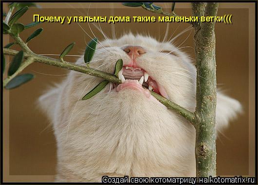 Котоматрица: Почему у пальмы дома такие маленьки ветки(((